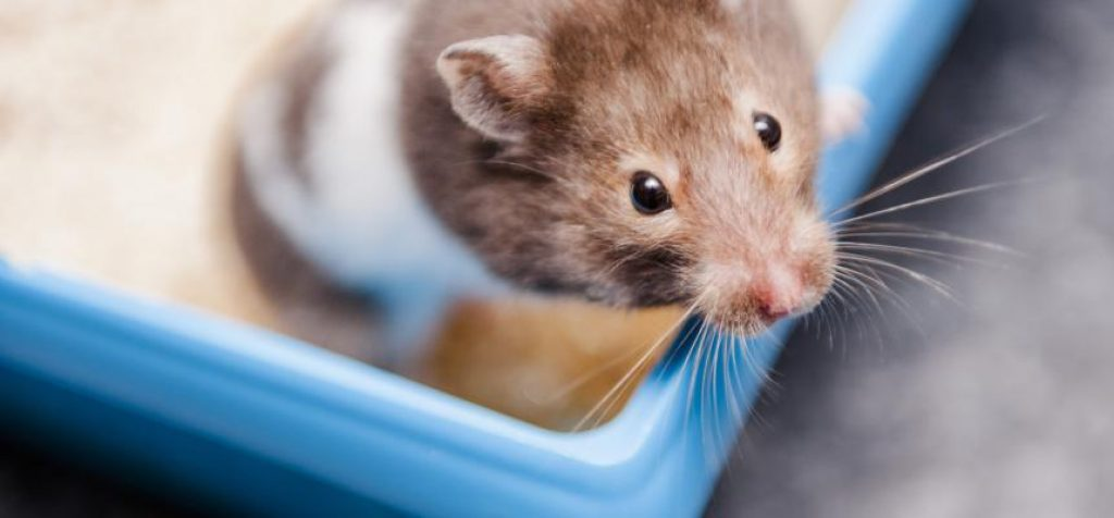 7 Jaw dropping facts about hamsters
