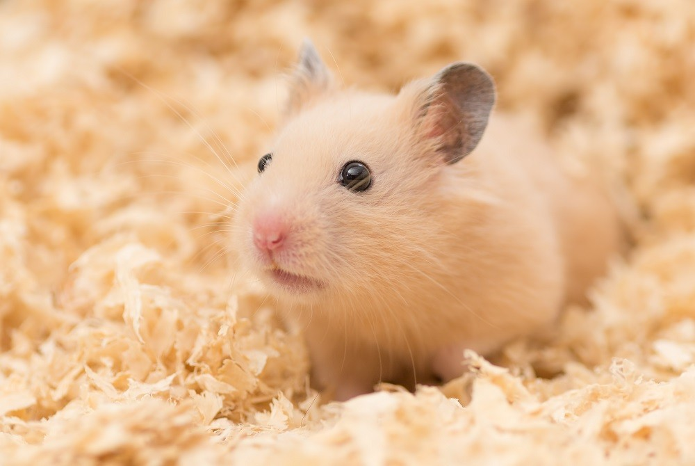 Best hamster cages for syrian hamsters