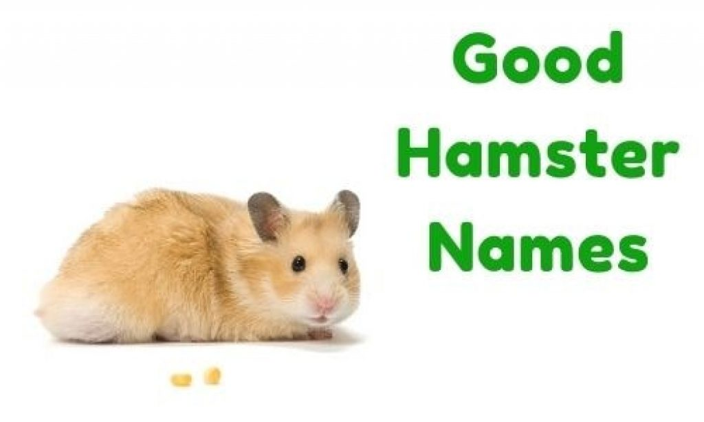 Good Ideas And Lists Of Hamster Names