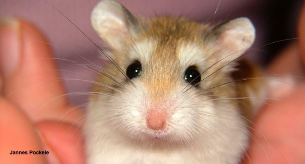How hard is it to take care of a hamster