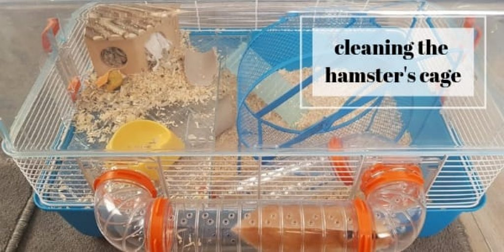 What can I use to clean my hamsters cage?