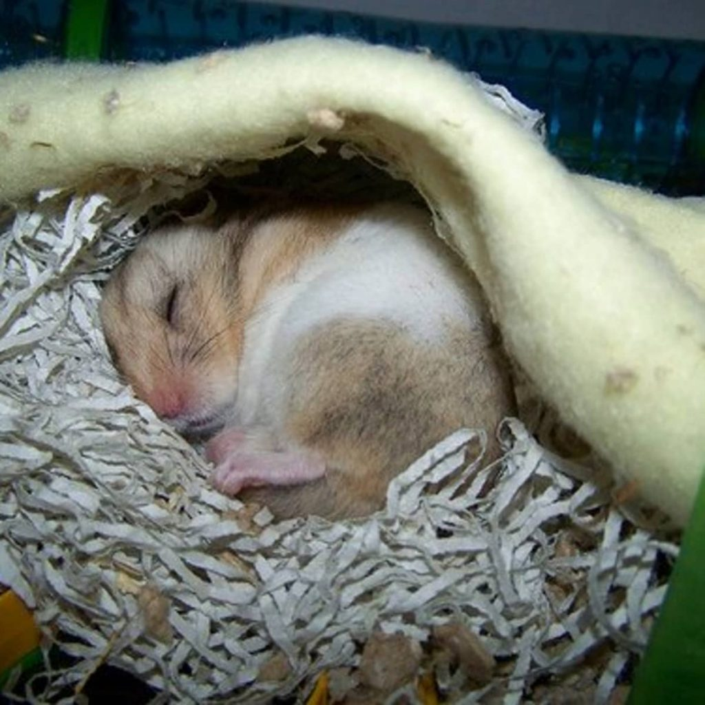 How to make a sick hamster feel better