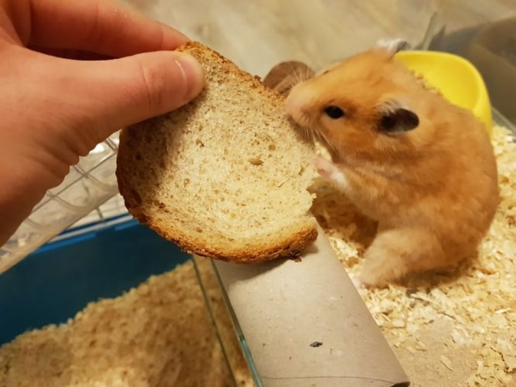 What Fruits And Vegetables Can Hamsters Eat?