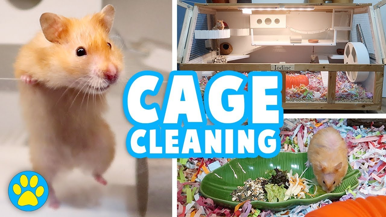 What can I use to clean my hamsters cage